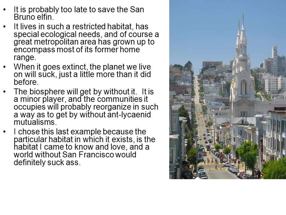 It is probably too late to save the San Bruno elfin.