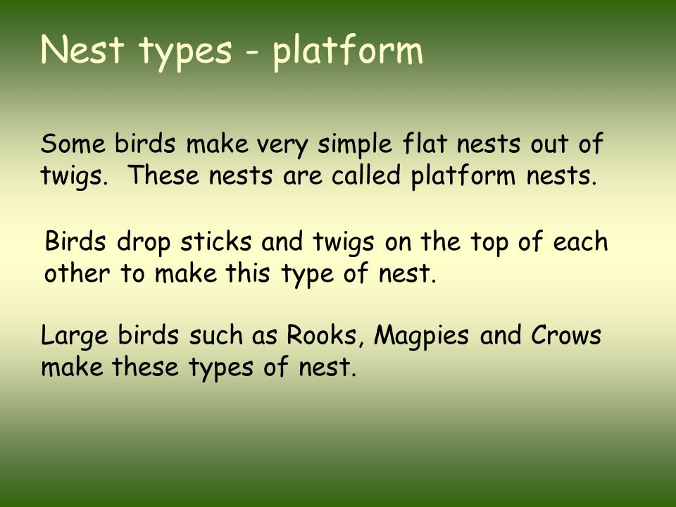 Nest types - platform Some birds make very simple flat nests out of twigs. These nests are called platform nests. Large birds such as Rooks, Magpies a