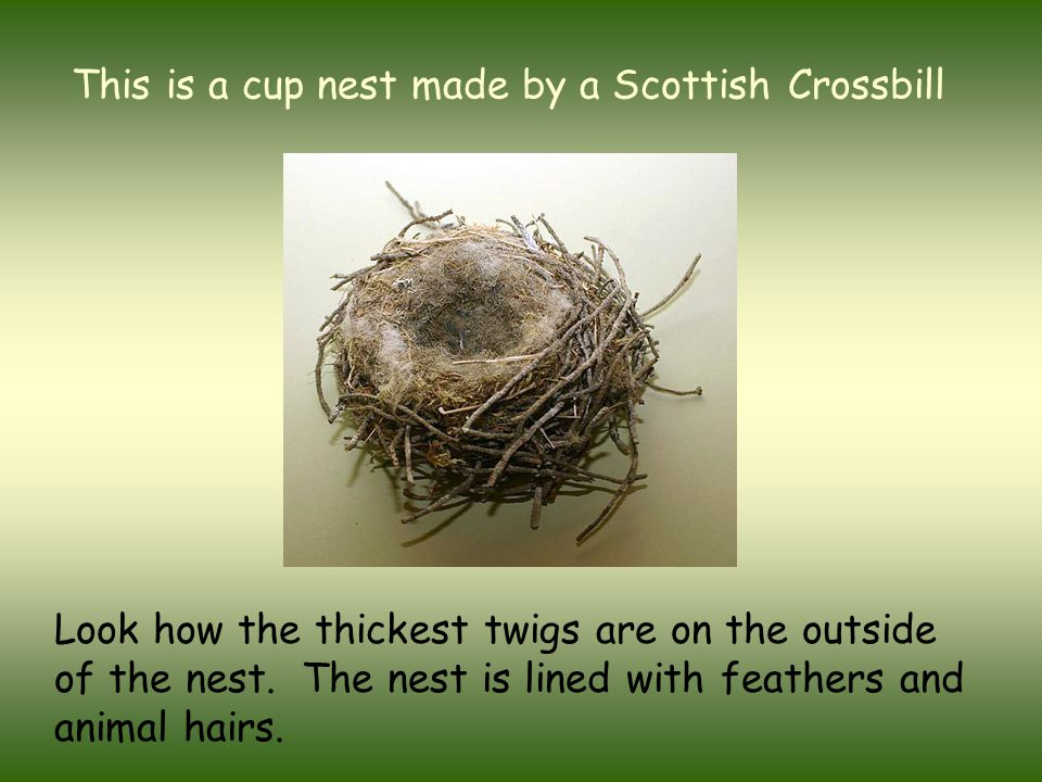 Birds use materials with different properties to build their nests  Sticks and twigs are strong  Grass and reeds are flexible  Plant down, feathers, animal hair and fur are soft and light  Spiders silk is sticky and elastic  Wet mud can be moulded and used for cementing other materials together