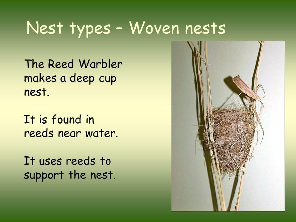 The nest of a Blackbird