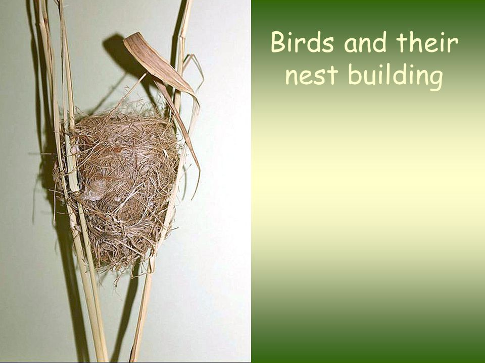 Birds and their nest building