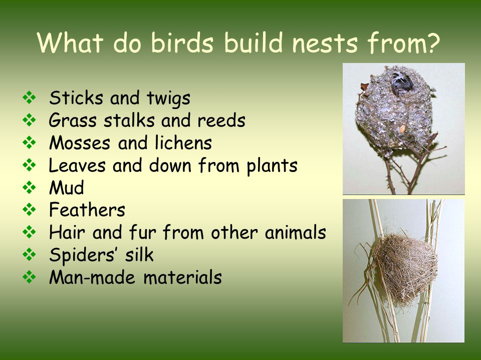 What do birds build nests from?  Sticks and twigs  Grass stalks and reeds  Mosses and lichens  Leaves and down from plants  Mud  Feathers  Hair