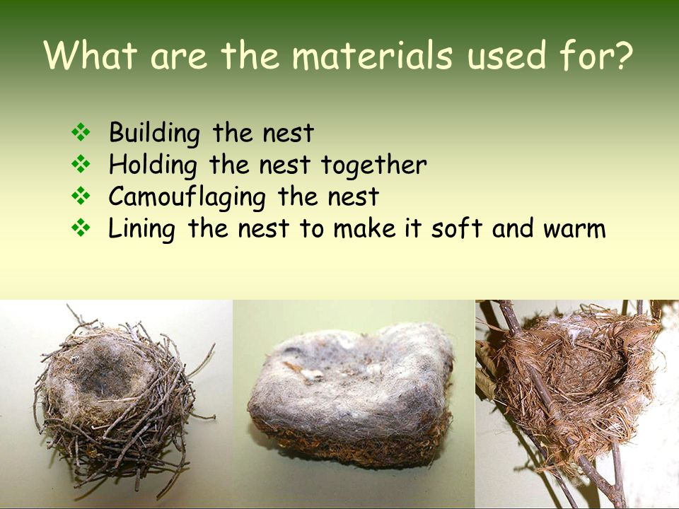 What are the materials used for?  Building the nest  Holding the nest together  Camouflaging the nest  Lining the nest to make it soft and warm