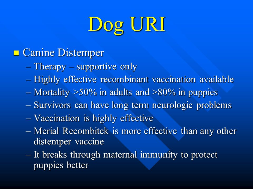 Dog URI Canine Distemper Canine Distemper –Therapy – supportive only –Highly effective recombinant vaccination available –Mortality >50% in adults and >80% in puppies –Survivors can have long term neurologic problems –Vaccination is highly effective –Merial Recombitek is more effective than any other distemper vaccine –It breaks through maternal immunity to protect puppies better