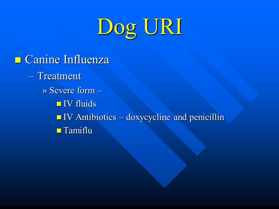 Dog URI Canine Influenza Canine Influenza –Treatment »Severe form – IV fluids IV fluids IV Antibiotics – doxycycline and penicillin IV Antibiotics – doxycycline and penicillin Tamiflu Tamiflu