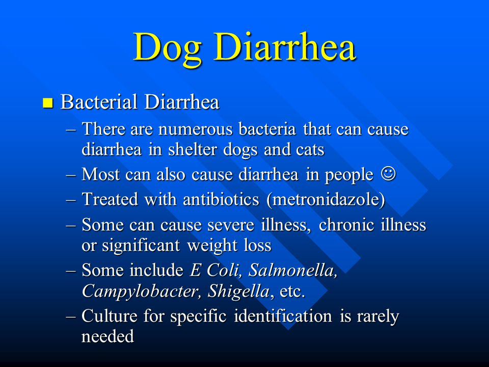 Dog Diarrhea Bacterial Diarrhea Bacterial Diarrhea –There are numerous bacteria that can cause diarrhea in shelter dogs and cats –Most can also cause diarrhea in people –Most can also cause diarrhea in people –Treated with antibiotics (metronidazole) –Some can cause severe illness, chronic illness or significant weight loss –Some include E Coli, Salmonella, Campylobacter, Shigella, etc.