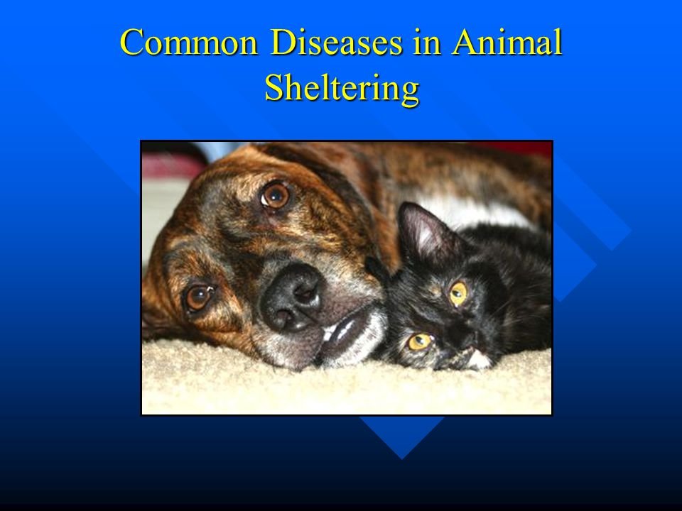 Common Diseases in Animal Sheltering