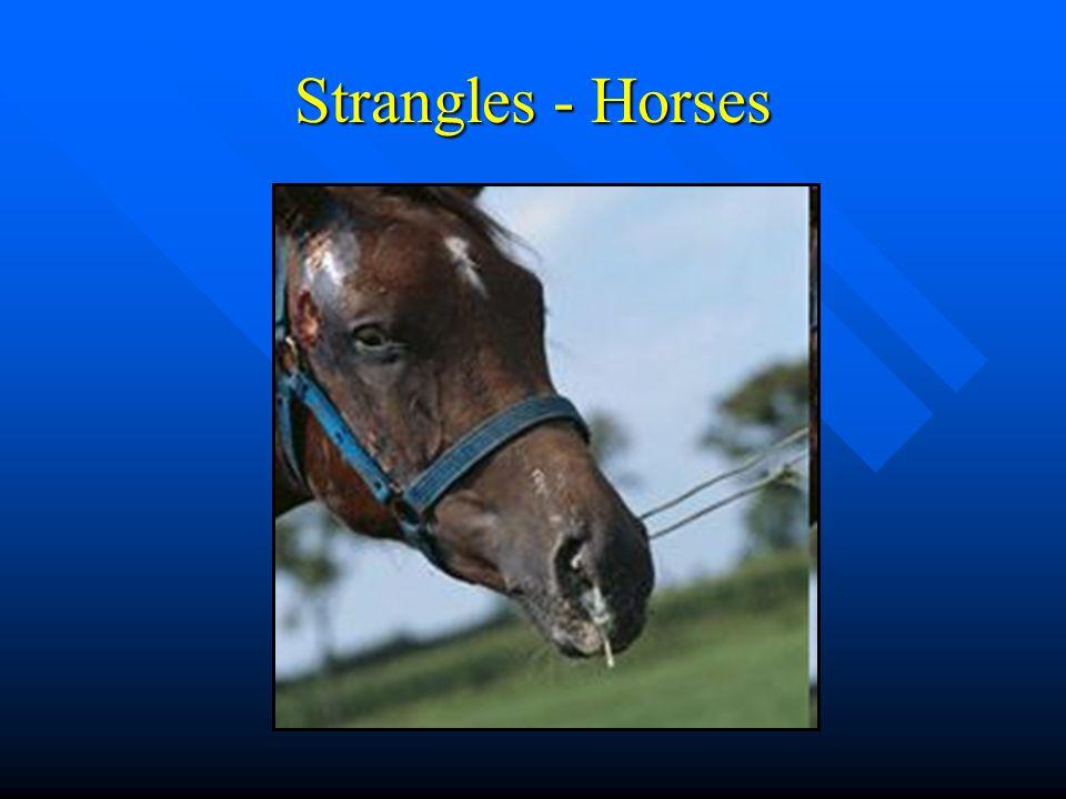 Strangles - Horses