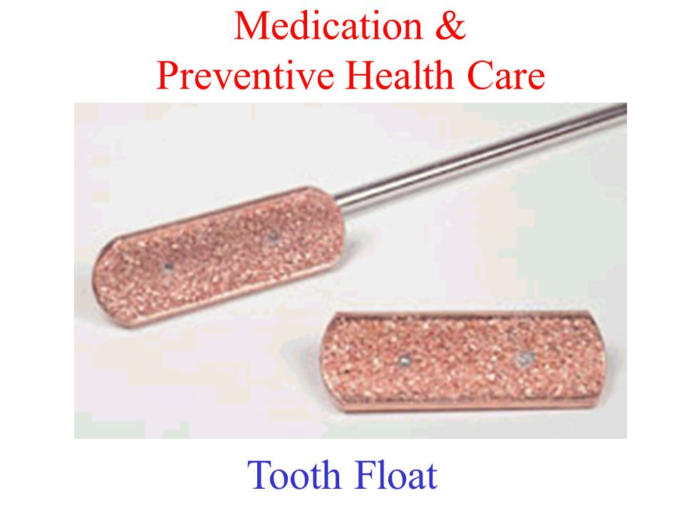 Medication & Preventive Health Care Tooth Float