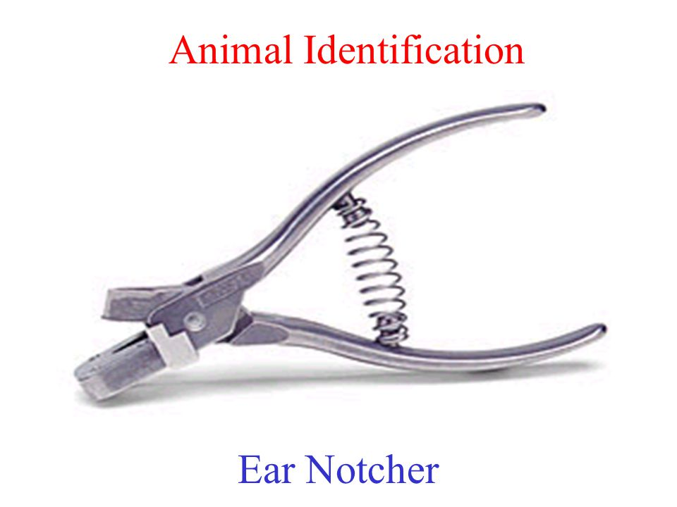 Animal Identification Ear Notcher
