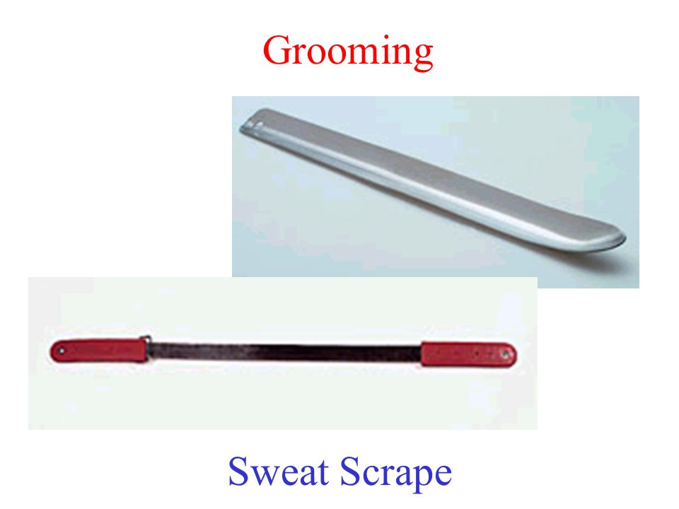 Grooming Sweat Scrape