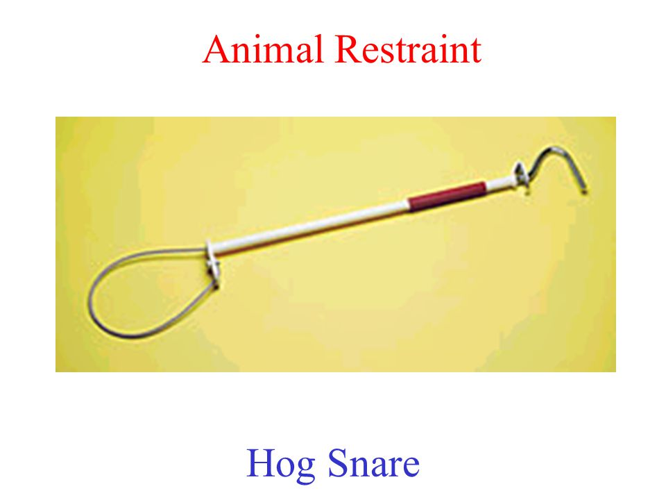 Animal Restraint Hog Snare