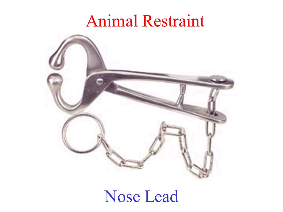 Animal Restraint Nose Lead