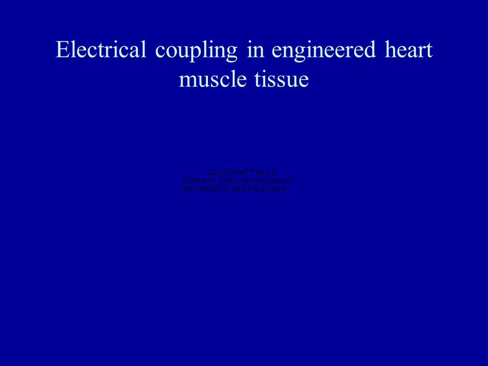 Electrical coupling in engineered heart muscle tissue