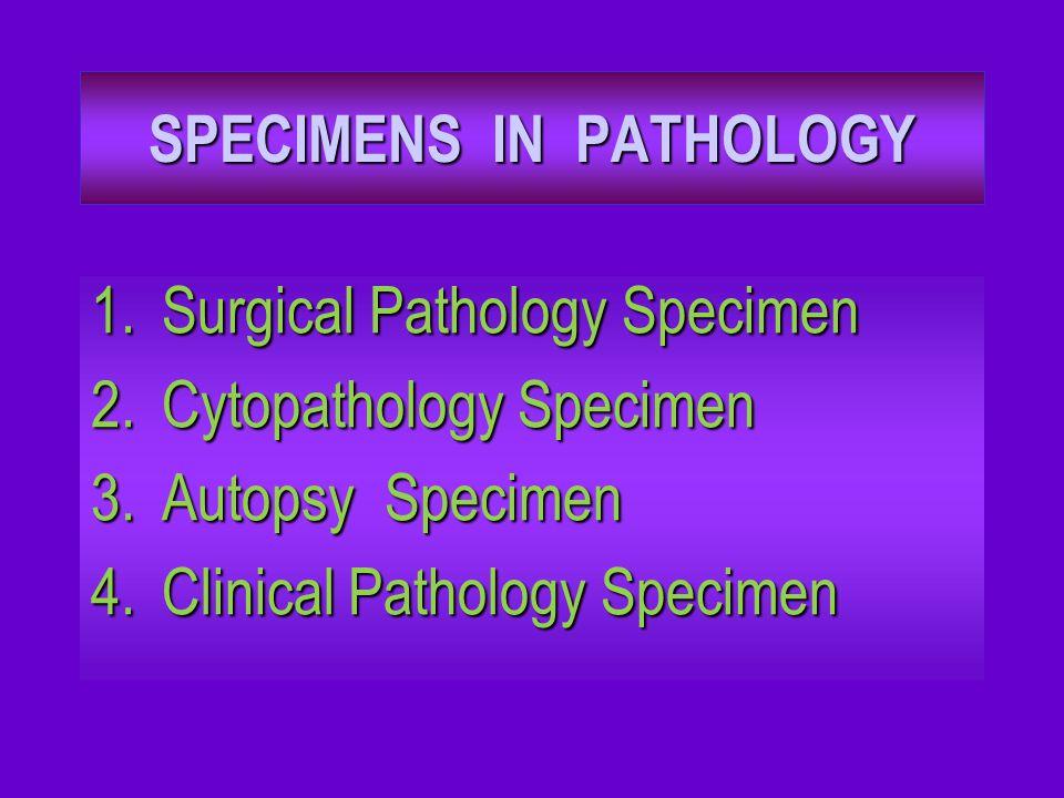 SPECIMENS IN PATHOLOGY 1.Surgical Pathology Specimen 2.Cytopathology Specimen 3.Autopsy Specimen 4.Clinical Pathology Specimen