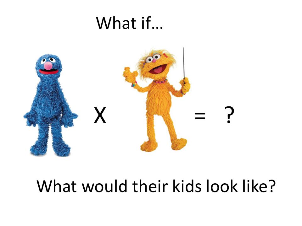 What if… X = What would their kids look like