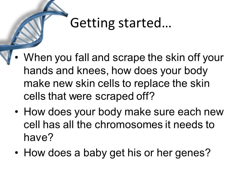 Getting started… When you fall and scrape the skin off your hands and knees, how does your body make new skin cells to replace the skin cells that were scraped off.