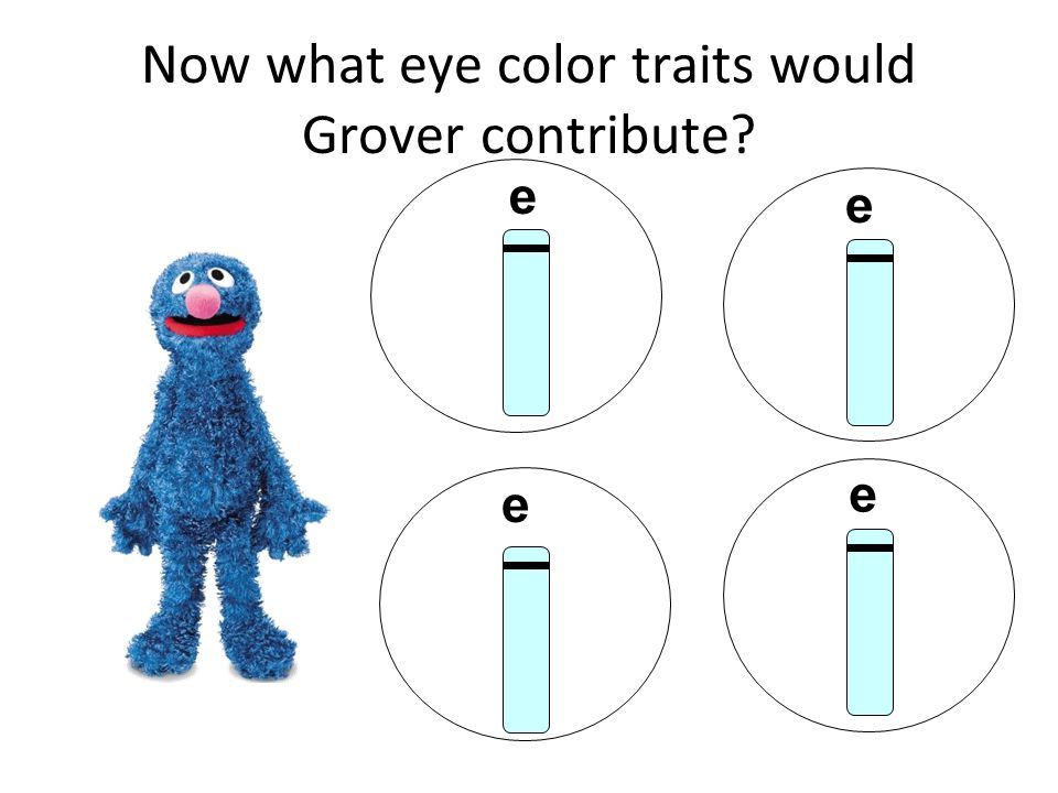 Now what eye color traits would Grover contribute e e e e