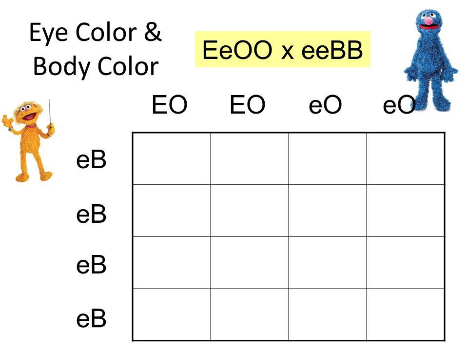 eO eB EO Eye Color & Body Color EeBO eeBO EeBO eeBO EeBO eeBO EeBO eeBO EOeO eB EeOO x eeBB