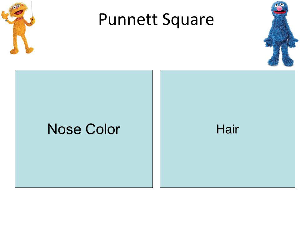Punnett Square NN Nn N n N N xhxhxhxh xhyxhy xHxhxHxh xHyxHy xhxh y xhxh xHxH Nose Color Hair