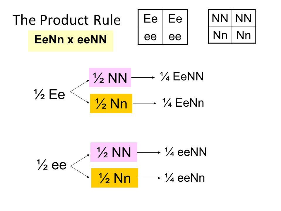 The Product Rule EeNn x eeNN Ee ee NN Nn ½ Ee ½ ee ½ NN ½ Nn ½ NN ½ Nn ¼ EeNN ¼ EeNn ¼ eeNN ¼ eeNn