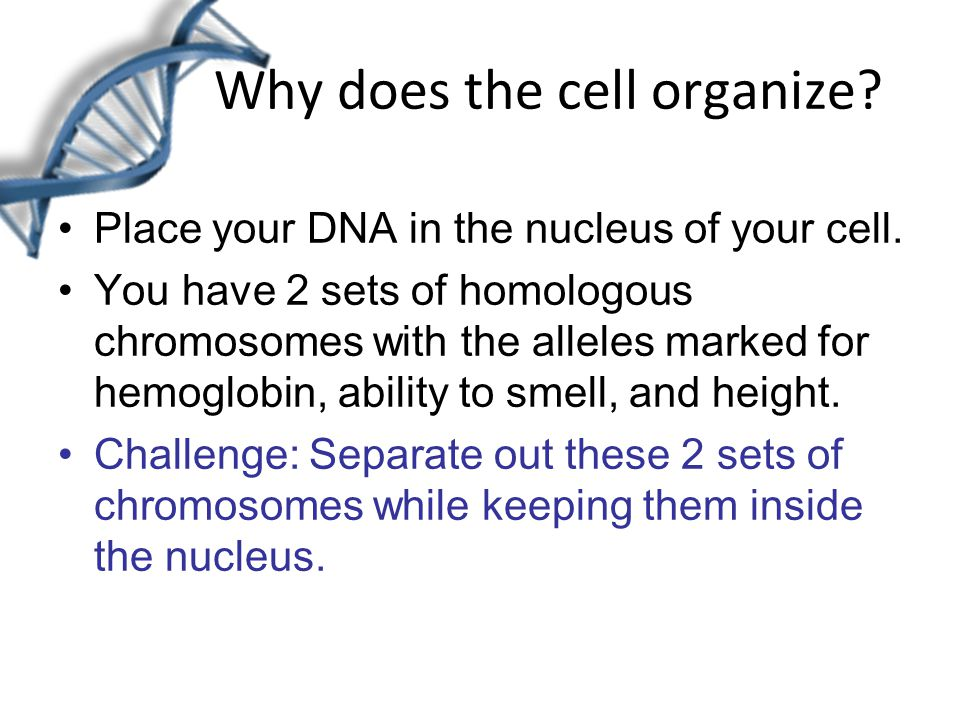 Why does the cell organize. Place your DNA in the nucleus of your cell.