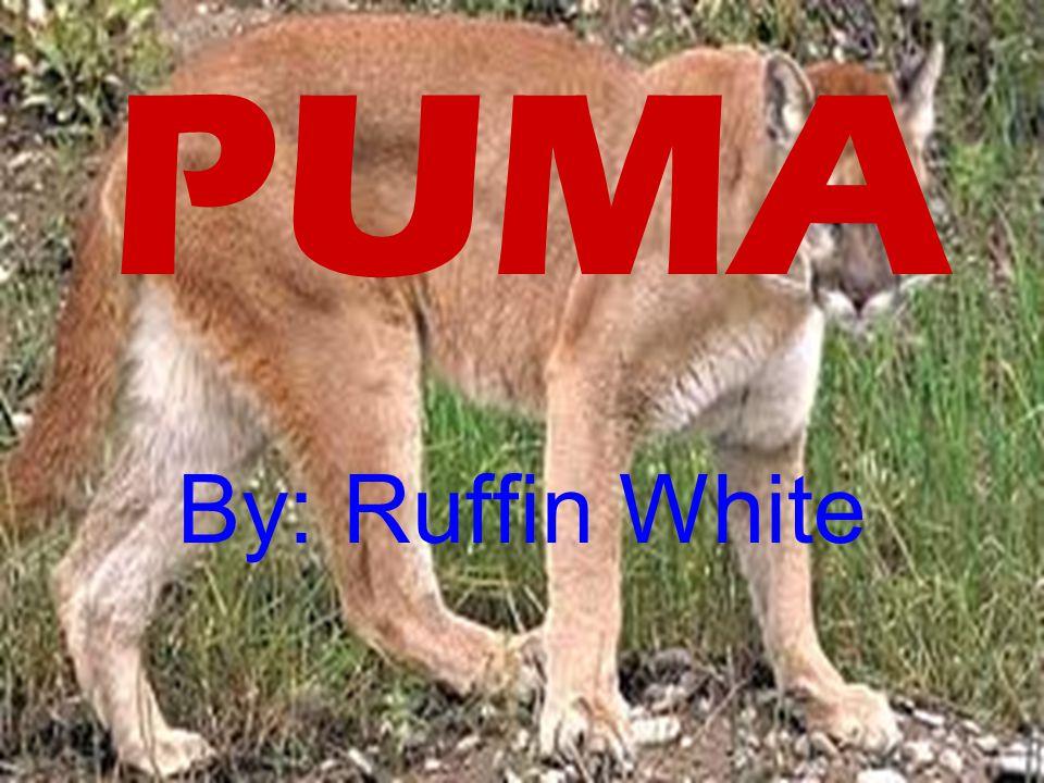 PUMA By: Ruffin White