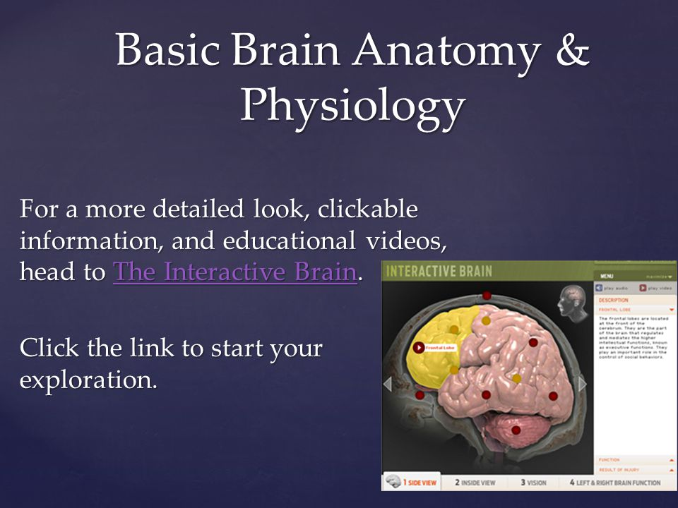 For a more detailed look, clickable information, and educational videos, head to The Interactive Brain.