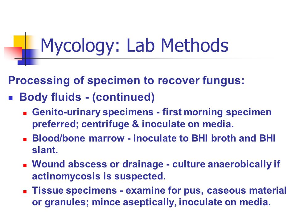 Mycology: Lab Methods Processing of specimen to recover fungus: Body fluids - (continued) Genito-urinary specimens - first morning specimen preferred;