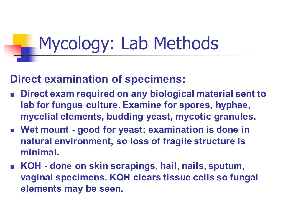 Mycology: Lab Methods Direct examination of specimens: Direct exam required on any biological material sent to lab for fungus culture. Examine for spo