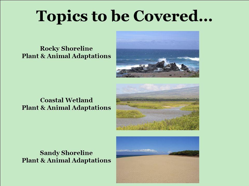 Topics to be Covered… Rocky Shoreline Plant & Animal Adaptations Coastal Wetland Plant & Animal Adaptations Sandy Shoreline Plant & Animal Adaptations
