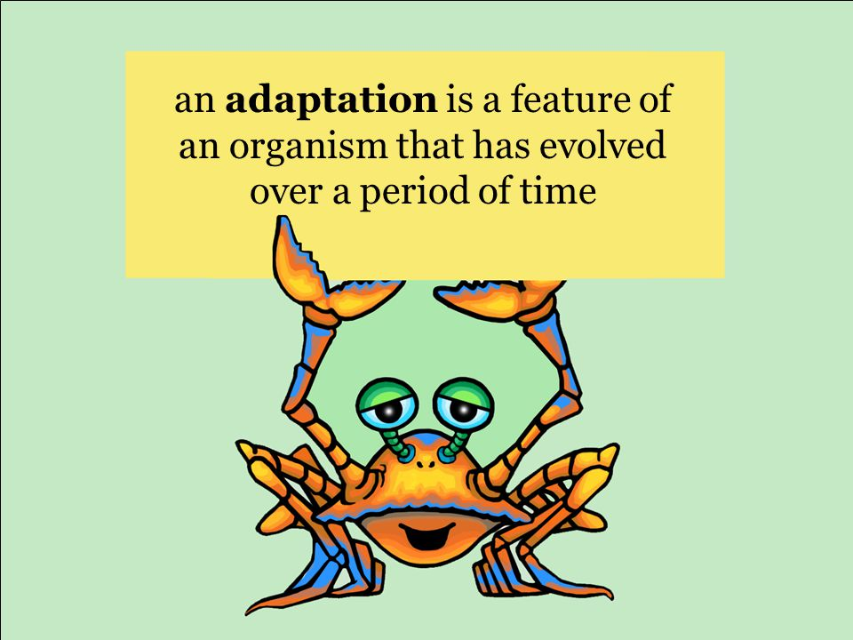 an adaptation is a feature of an organism that has evolved over a period of time