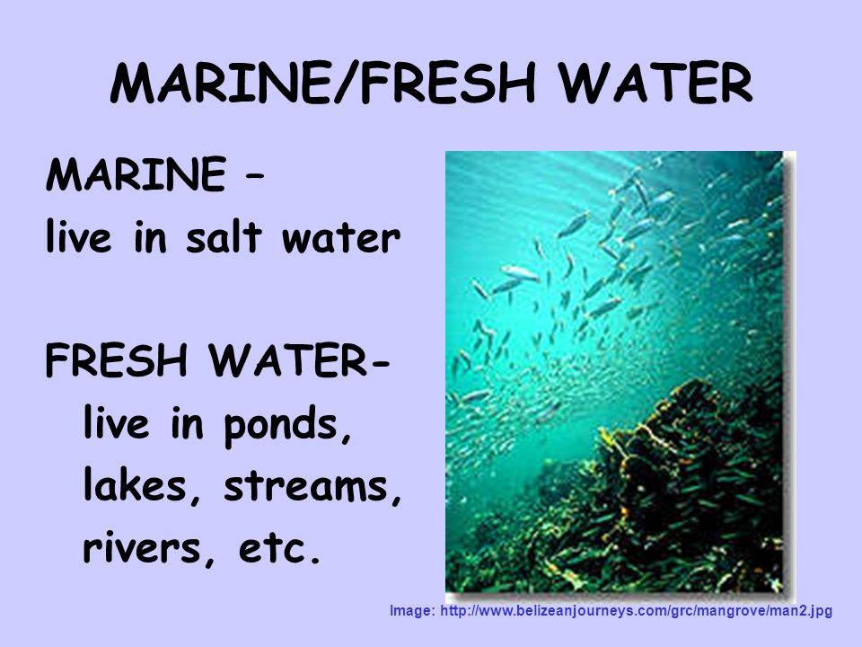 MARINE/FRESH WATER MARINE – live in salt water FRESH WATER- live in ponds, lakes, streams, rivers, etc.