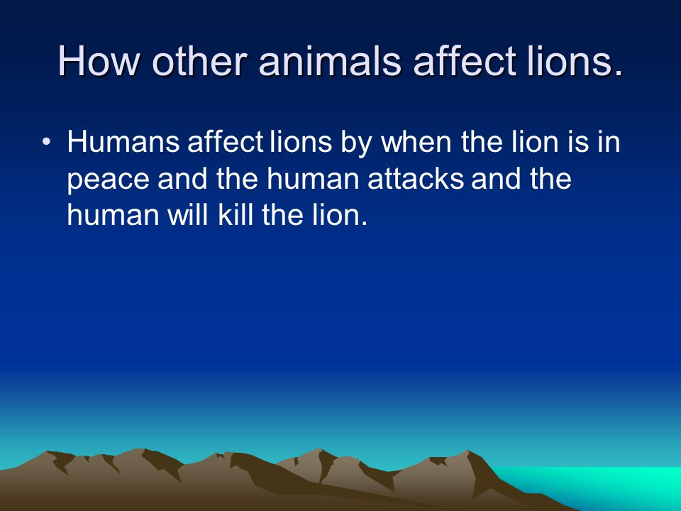 How other animals affect lions.