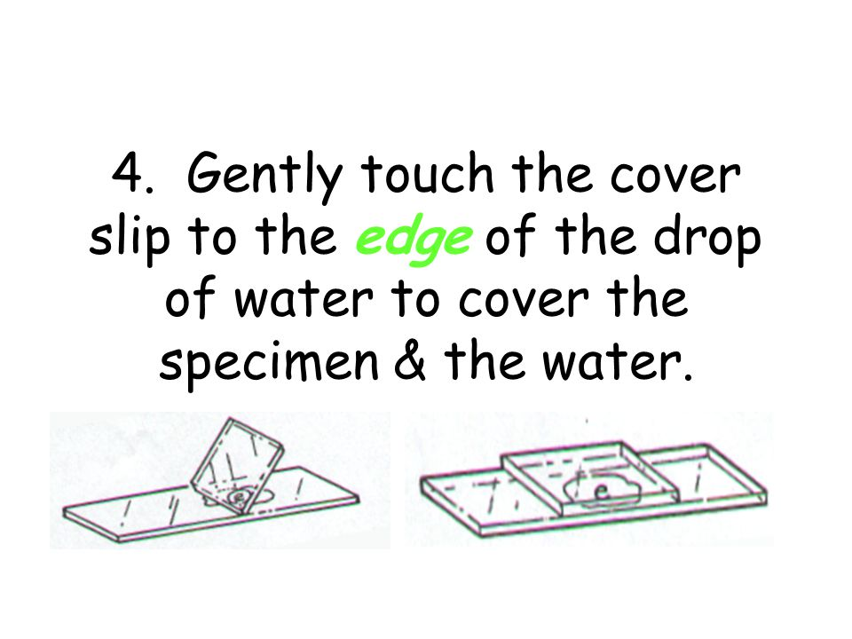 3.Gently stir the toothpick in the drop of water and then THROW IT AWAY.