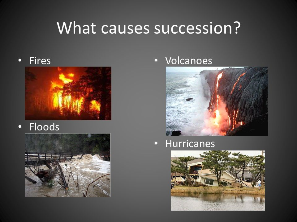 What causes succession? Fires Floods Volcanoes Hurricanes