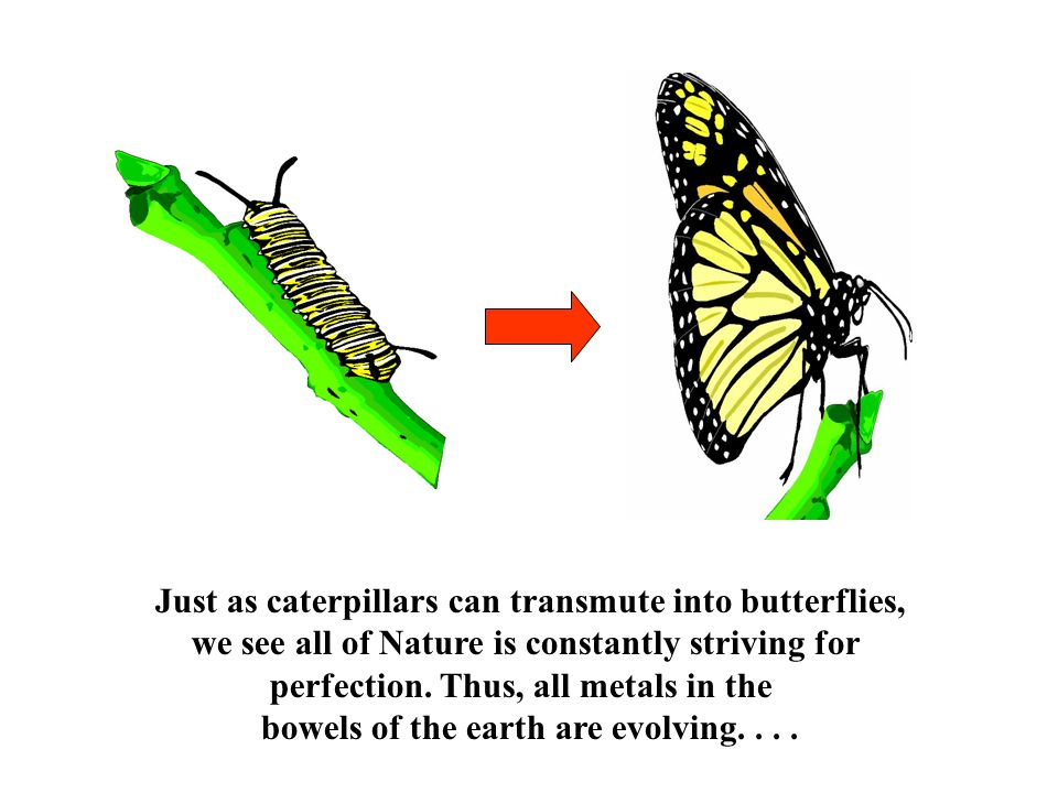 Just as caterpillars can transmute into butterflies, we see all of Nature is constantly striving for perfection.