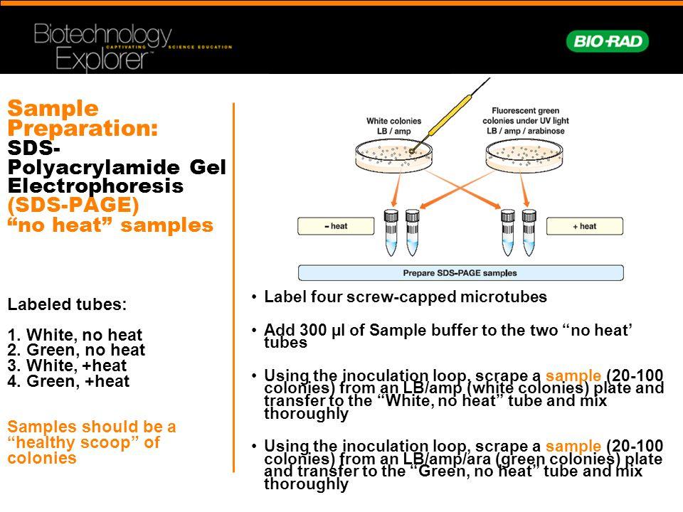 Sample Preparation: SDS- Polyacrylamide Gel Electrophoresis (SDS-PAGE) no heat samples Labeled tubes: 1.