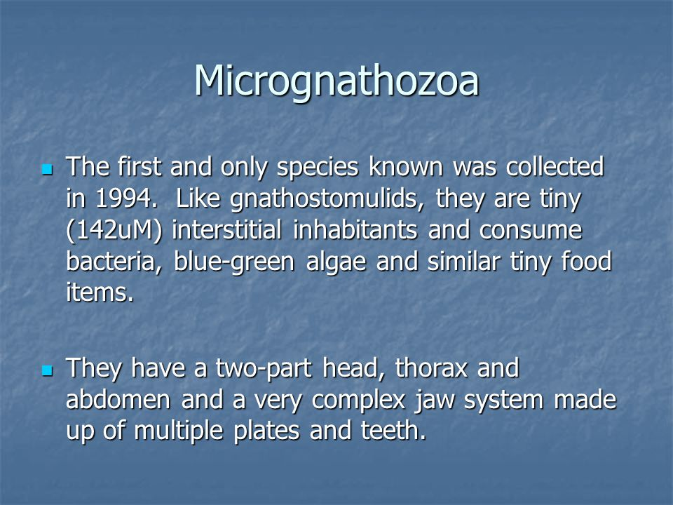 Micrognathozoa The first and only species known was collected in 1994.