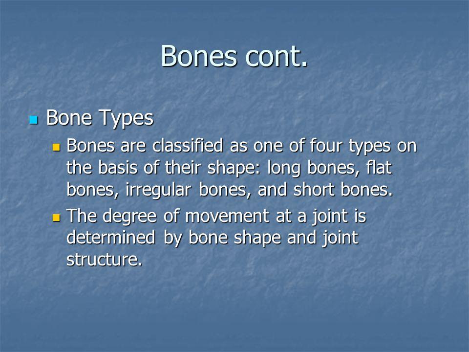 Bones cont.