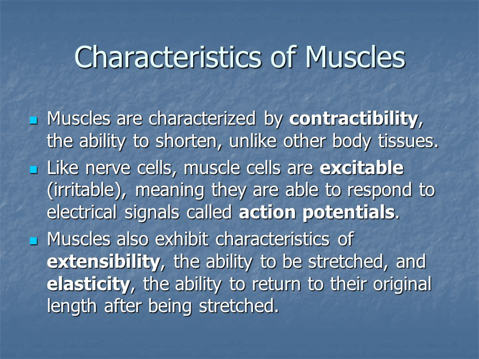 Characteristics of Muscles Muscles are characterized by contractibility, the ability to shorten, unlike other body tissues.