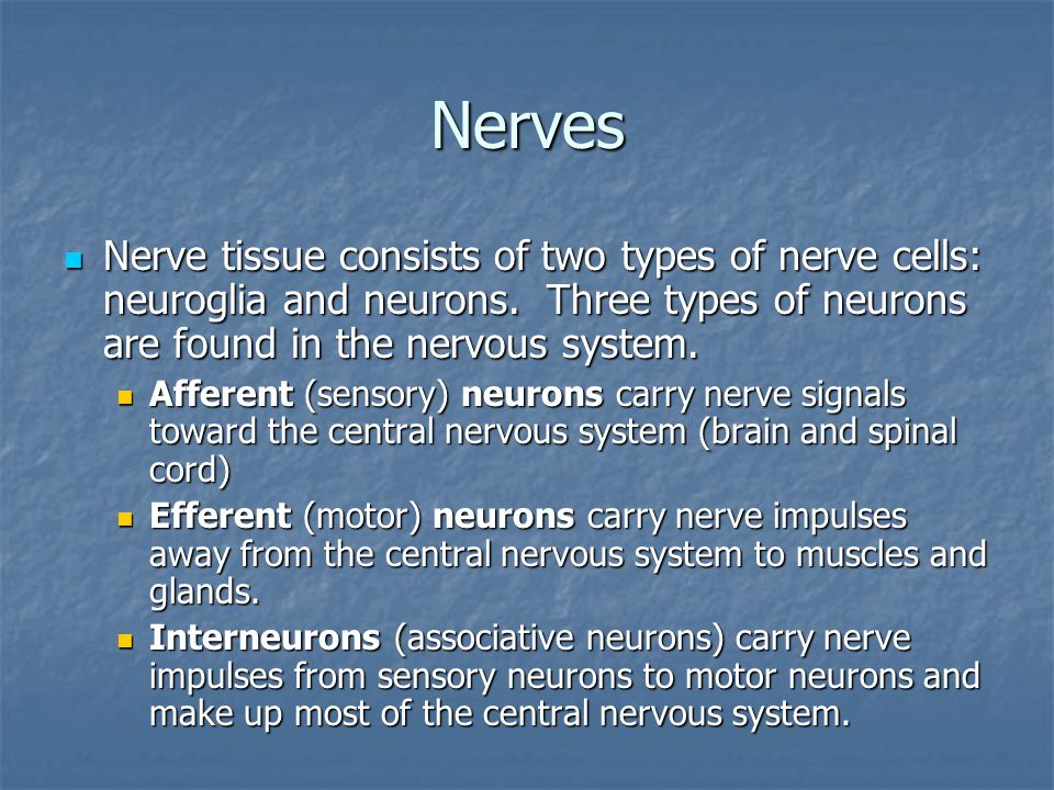 Nerves Nerve tissue consists of two types of nerve cells: neuroglia and neurons.