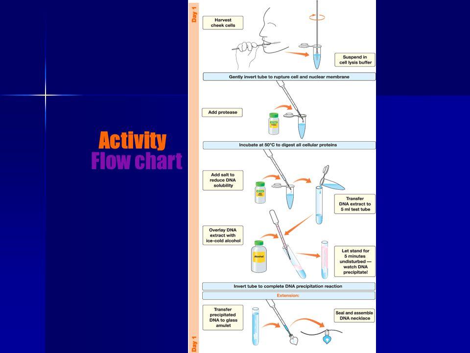 Flow chart Activity