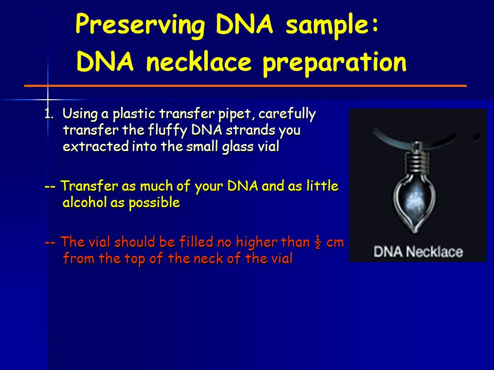 Preserving DNA sample: DNA necklace preparation 1. Using a plastic transfer pipet, carefully transfer the fluffy DNA strands you extracted into the sm
