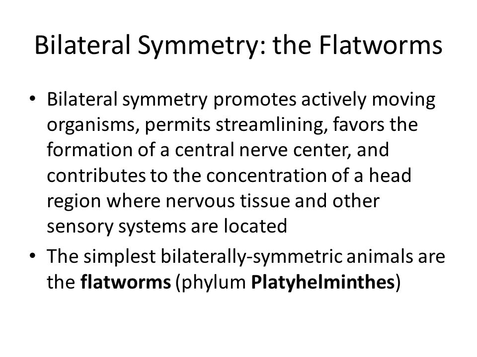 Bilateral Symmetry: the Flatworms Bilateral symmetry promotes actively moving organisms, permits streamlining, favors the formation of a central nerve center, and contributes to the concentration of a head region where nervous tissue and other sensory systems are located The simplest bilaterally-symmetric animals are the flatworms (phylum Platyhelminthes)