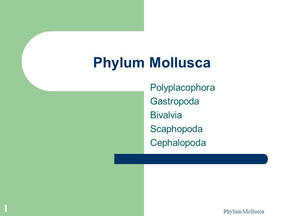 Phylum Mollusca 1 Polyplacophora Gastropoda Bivalvia Scaphopoda Cephalopoda