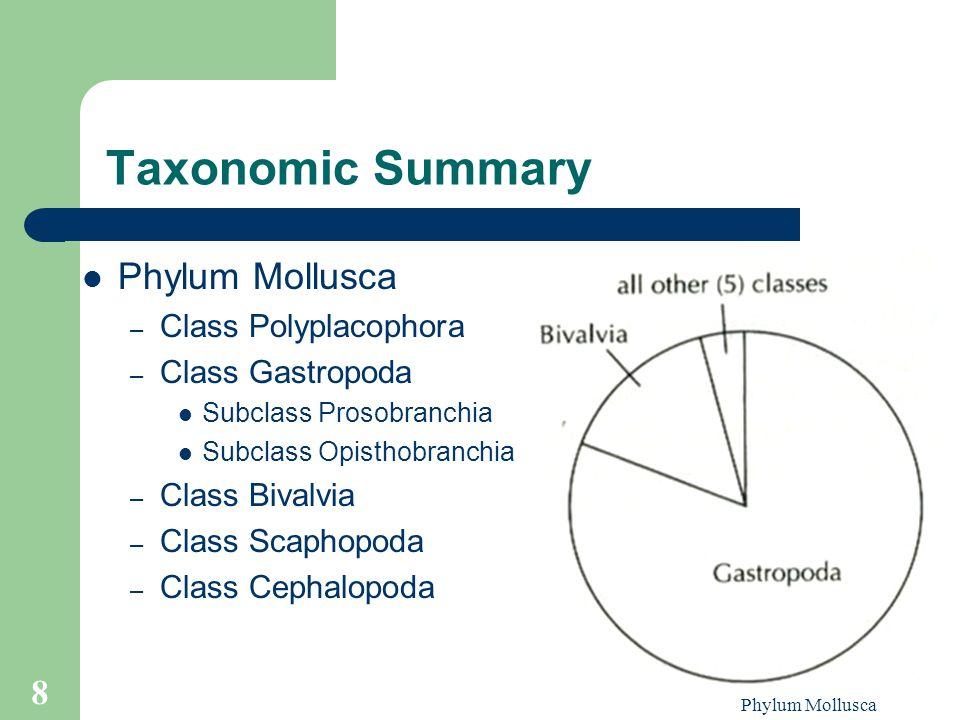 Phylum Mollusca 8 Taxonomic Summary Phylum Mollusca – Class Polyplacophora – Class Gastropoda Subclass Prosobranchia Subclass Opisthobranchia – Class