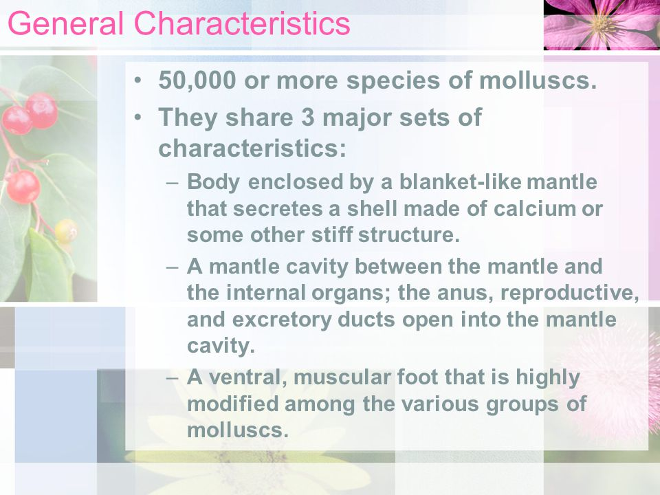 General Characteristics 50,000 or more species of molluscs. They share 3 major sets of characteristics: –Body enclosed by a blanket-like mantle that s