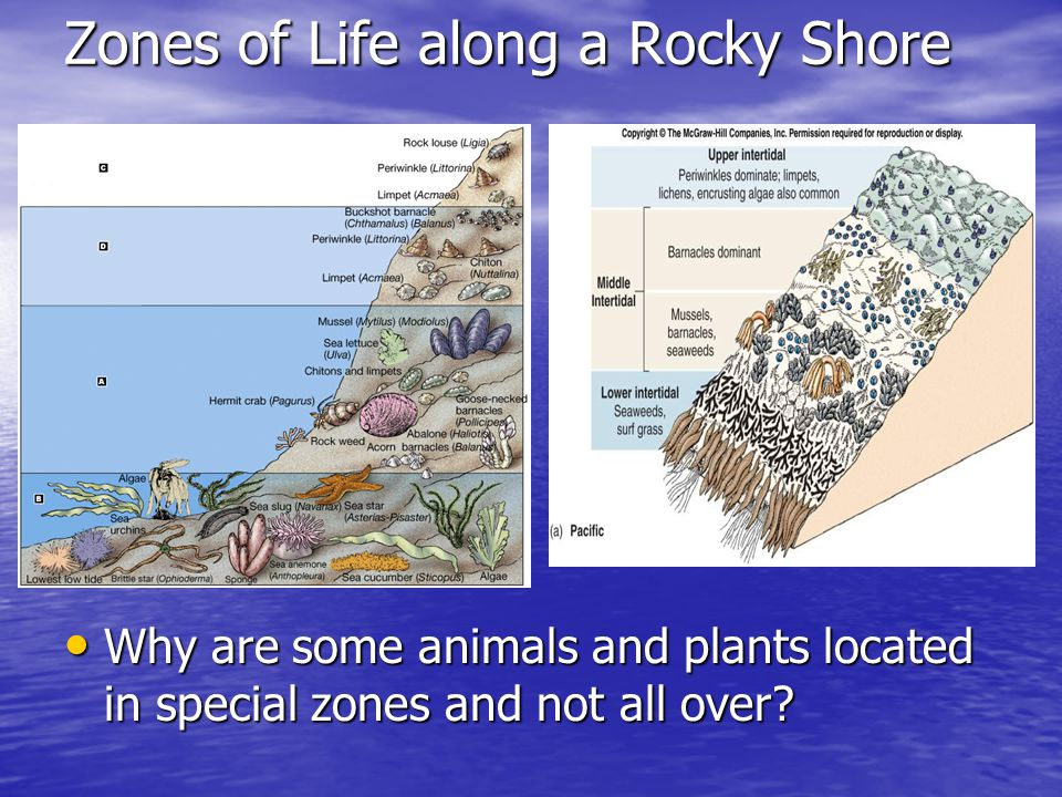 Zones of Life along a Rocky Shore Why are some animals and plants located in special zones and not all over.