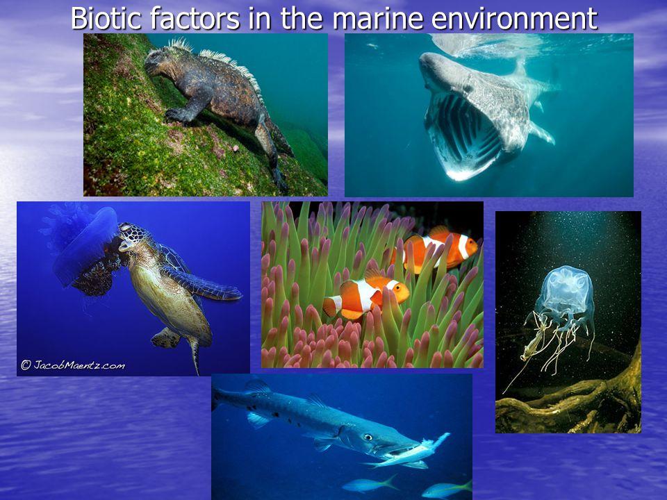 Biotic factors in the marine environment